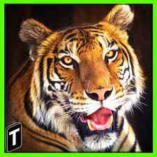 tiger apk tiger sim 2017 v1 0 mod apk money apkdlmod