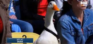 aflac commercial actress in gym aflac duck commercial photos google search office ideas pinterest