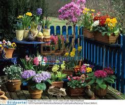 topfpflanzen balkon details zu 0003121676 topfpflanzen balkonbepflanzung