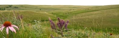 native prairie plants djuptodal nokota hästar om nokota hästarna och deras omgivning