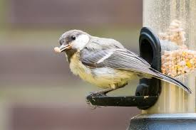 birds 2017 news and scientific articles on live science