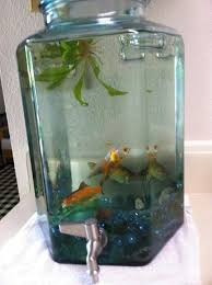best 25 small fish tanks ideas on freshwater aquarium