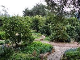 Small Polyculture Garden Gardening  Food Production Pinterest - Backyard orchard design