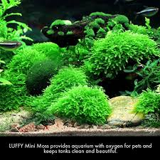 amazon com luffy coco mini moss builds a beautiful and natural
