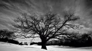 oak tree wallpapers 32963 2560x1440 px hdwallsource com