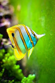 marine fish pictures and names list of marine aquarium fish