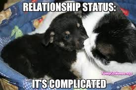 Cat And Dog Memes - relationship status funny cat meme