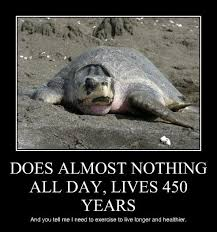 Turtle Meme - you tell me turtles memes animalmemes funny shiet