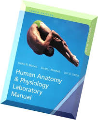 Human Anatomy And Physiology Lab Manual Marieb Holes Human Anatomy Lab Manual 11th Edition Primoscrib Net
