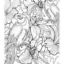parrot coloring pages adults free print