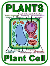 best 25 plant cell labeled ideas on pinterest plant cell parts