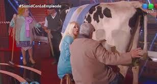 imagenes asquerosas de accidentes bizarro susana ordeñó una vaca que tuvo un asqueroso accidente en