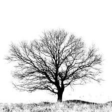 best 25 black and white tree ideas on black tree