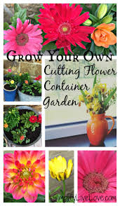grow a beautiful u0026 colorful cutting flower container garden