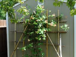 how to build a bamboo trellis for your garden and make your garden