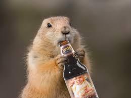 groundhog beer american craft beer