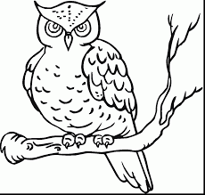 astonishing cute owl coloring pages birthday with cute owl