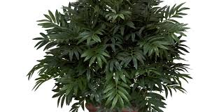 plant small 5 to 6 beautiful artificial trees and