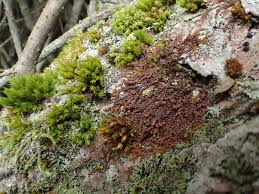 what type of moss is being used by green city solutions to reduce