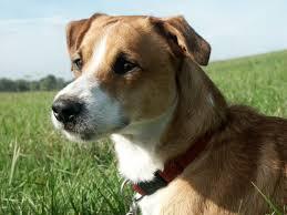 Tierheim Bad Salzuflen Hunde Peppo Mischling Beagle U0026 Kooiker Pawshake Pawshake