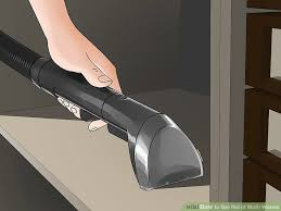 3 ways to get rid of moth worms wikihow