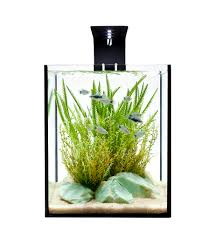 home accessories effective aquascape designs in a desktop effective aquascape designs in a desktop aquarium for contemporary interior home designs