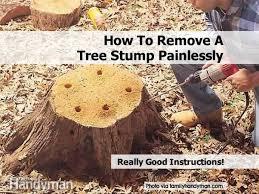 family handyman garden shed remove tree stump by familyhandyman com 2b jpg