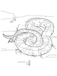 green anaconda coloring free printable coloring pages
