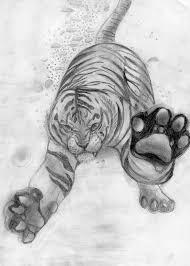white tiger sketch by takas15 on deviantart