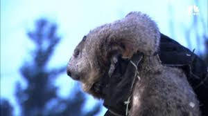 groundhog spotlights america u0027s favorite weather animal nbc