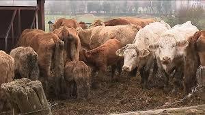 chambre agriculture franche comté une cellule d écoute pour les agriculteurs en difficultés lancée en