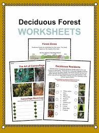 deciduous forest biome facts worksheets u0026 information for kids