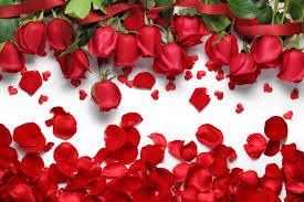 wallpaper flower red rose 45 red flowers wallpaper