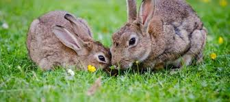 rabbit food can hamsters eat rabbit food online hamster care
