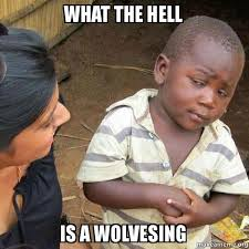 What The Hell Is A Meme - what the hell is a wolvesing make a meme