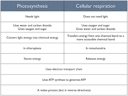 dating xat romania cellular respiration photosynthesis