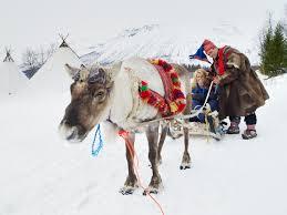 reindeer sleigh in tromso area fjord travel norway