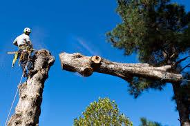 about molina s tree service