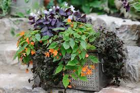 five plants for a north facing wall gardenersworld com