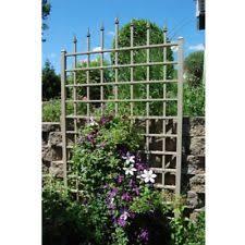 vigoro english garden trellis climbing plants grape vine support