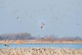 what it u0027s like to camp out with 15 000 sandhill cranes audubon