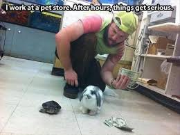 Meme Store - funny pet store meme bajiroo com