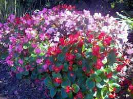 july ornamental plant tips of maryland extension