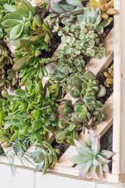 how to make a vertical succulent garden