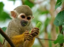 rainforest monkeys