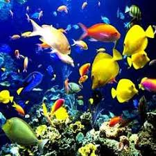 marine fishes buy in chennai