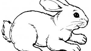 rabbits coloring pages realistic gekimoe u2022 21714