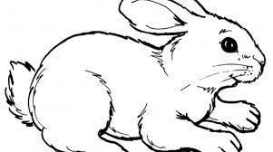 rabbits coloring pages realistic gekimoe u2022 21714