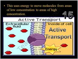Cell Transport Skills Worksheet Answers Cell Transport Osmosis Diffusion Active Transport Powerpoint