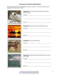 animal adaptation worksheet free worksheets library download and